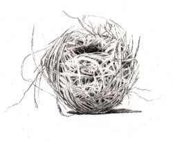 02-nest14