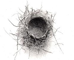 03-nest13