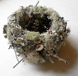 WN-Lichen