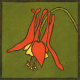 02-WildColumbine