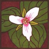 07-PaintedTrillium